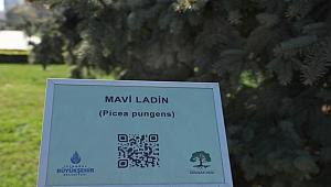Konuşan ağaçlar projesi teknolojiyi çevreyle buluşturuyor
