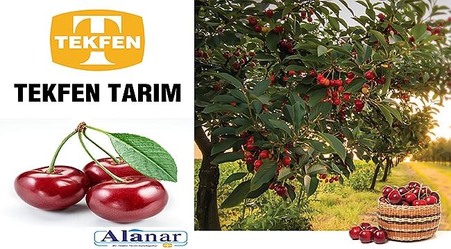 Türk kirazına uluslararası lezzet yıldızı