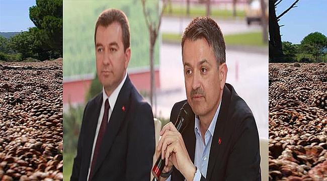 Bergama'dan Ankara'ya çam fıstığı seferberliği