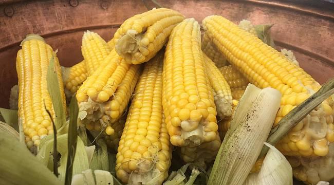 İBB'nin Milli Tarım Yerli Tohum projesinde ilk hasat yapıldı