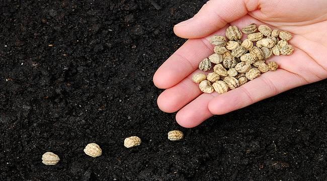 TÜRKTOB Başkanı Akcan: Hedefimiz dünya tohum sektöründe ilk 5'te yer almak