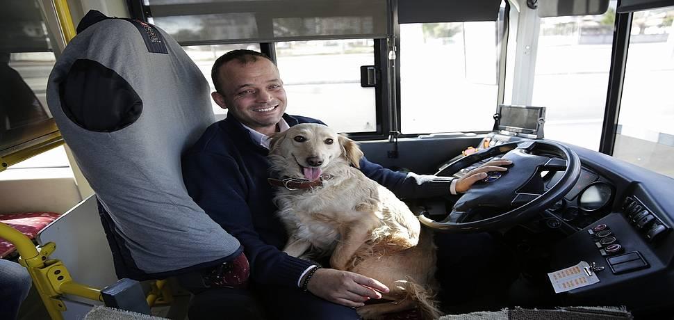 Soğuk havada üşüyen köpek otobüse sığındı