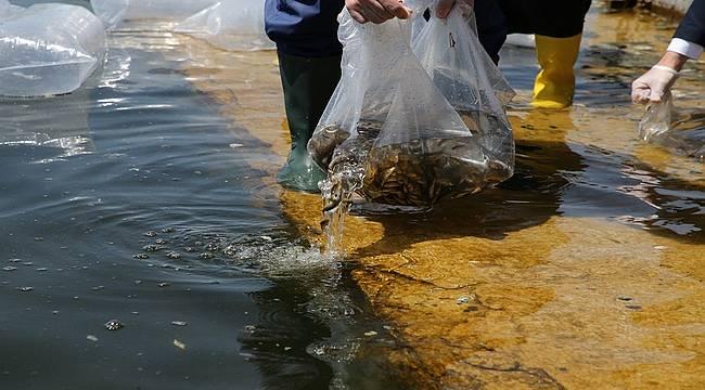 35 bin sazan yavrusu Mogan Gölü'ne bırakıldı