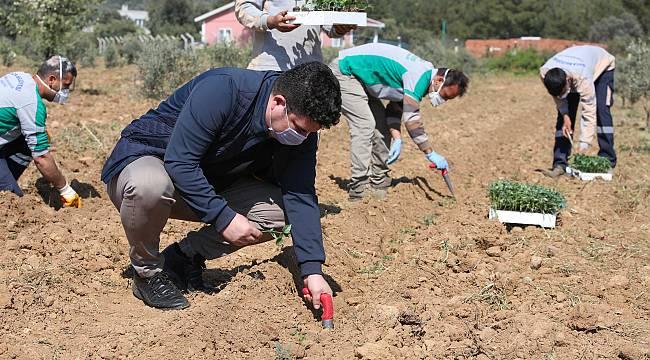Buca Belediyesi'nden Türkiye'ye örnek olacak tarım hamlesi