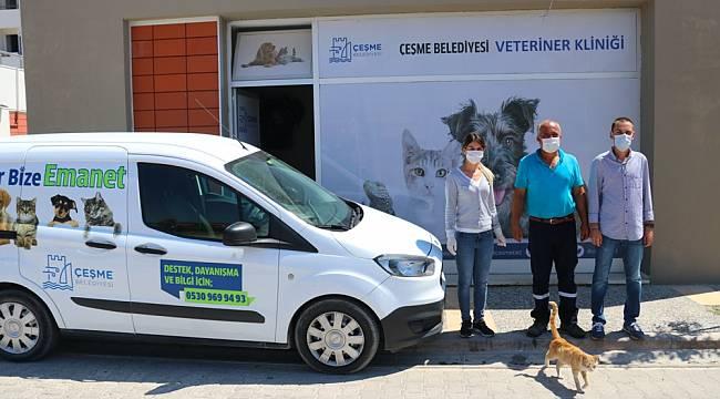 Çeşme Belediyesi'nden sokak hayvanlarına ücretsiz veterinerlik hizmeti