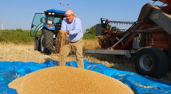 Çeşme'de 'karakılçık buğdayı' hasadı başladı