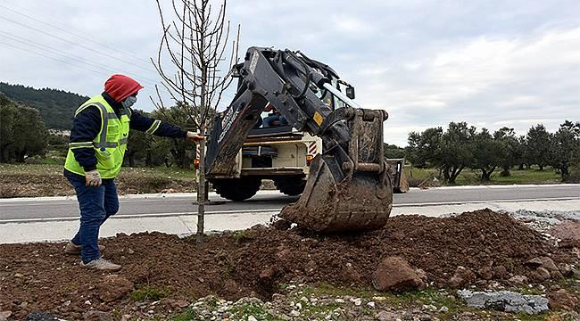 Aliağa Belediyesi ağaçlandırma çalışmalarını sürdürüyor