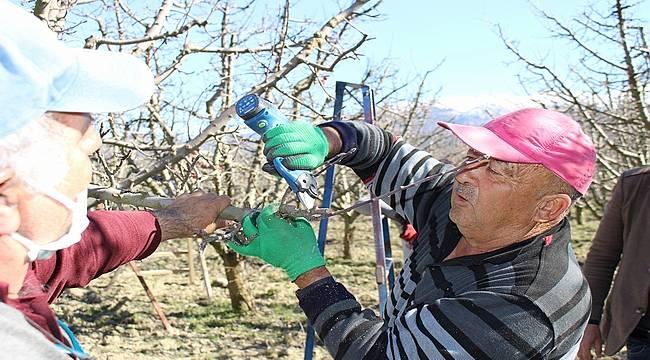 Antalya Elmalı'da çiftçilere budama eğitimi