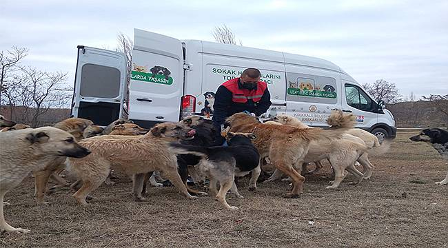 Tüpraş, sokak hayvanlarının yiyecek ihtiyacı için desteğini sürdürüyor