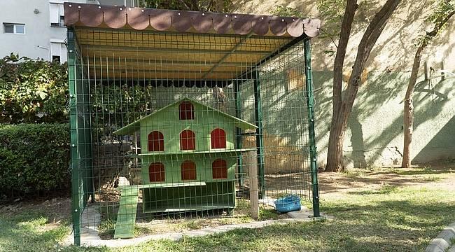 Karşıyaka Belediyesinden can dostları 'ev'lendirecek proje: KediYaka