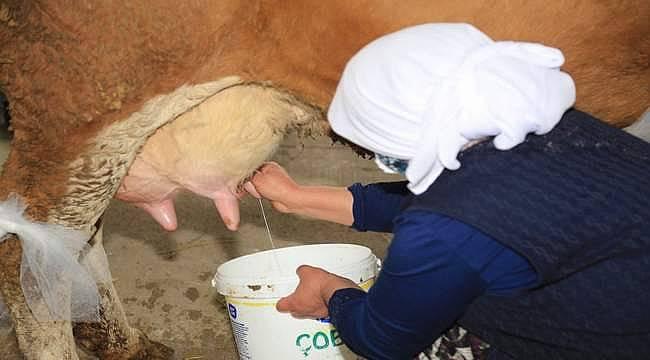 AGROTEC Tarım Fuarı'nda Süt Sağma Yarışması