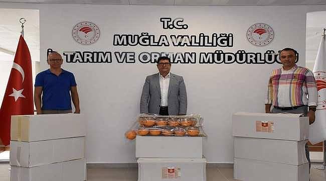 """EİB'den """"Akdeniz Meyve Sineği İzleme Projesi""""ne destek"""
