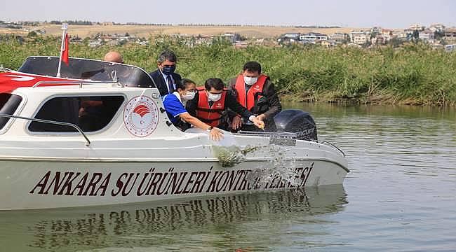 Mogan Gölün'e 100 bin adet sazan balığı bırakıldı