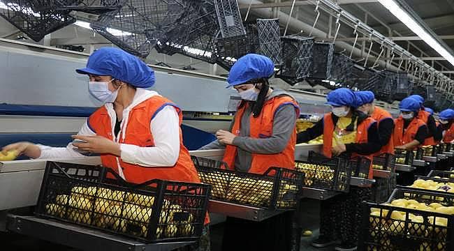 Belçika ve Hollanda'ya meyve sebze mamul ihracatını Ege Bölgesi sırtlıyor