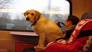 Toplu taşıma araçlarında evcil hayvan taşımak ve Cat-TaxisJ